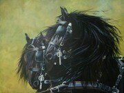 Judy Vanderveen, the Friesians