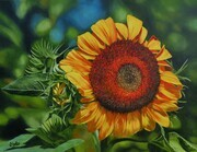 Lynn Sykes, Sunflower